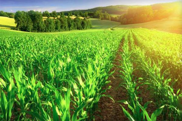 Kako-planirati-i-razvijati-odrzivo-poljoprivredno-gazdinstvo